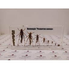 """Колекція """"Розвиток комах з неповним перетворенням"""" (Сарана)"""