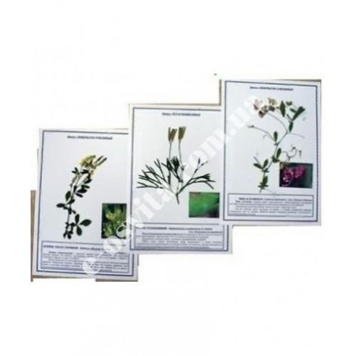 Гербарій «Лікарські рослини»