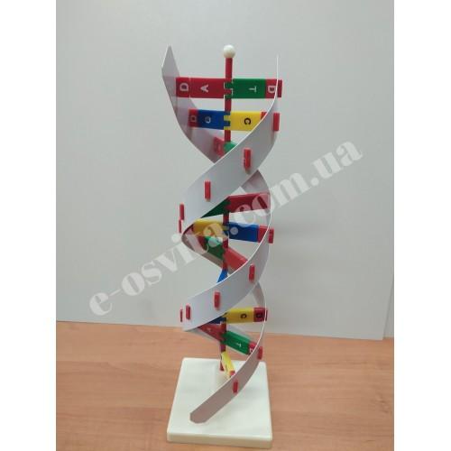 """Модель """"Структура ДНК"""""""